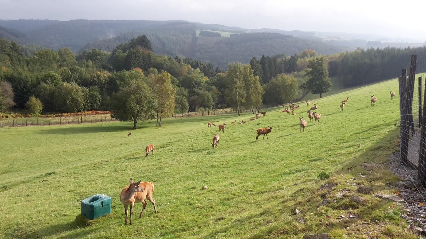 Het mooie dierenpark Entre Ferme & Fôret in Rochehaut-sur-Semois.