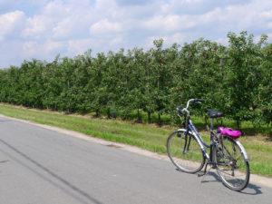 Fietstocht langs appelplantages