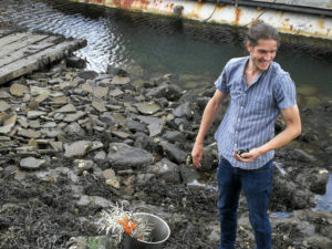 Eetbare kruiden en bessen, het resultaat van een strandwandeling