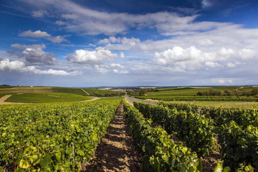 shutterstock_496709149.wijngaard