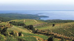 Wine route Chalkidiki