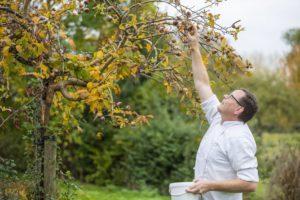Romeinse mispels in de boomgaard
